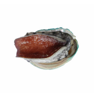 buy live abalone singapore