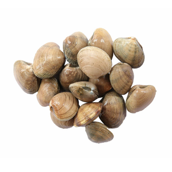 buy live manila clams