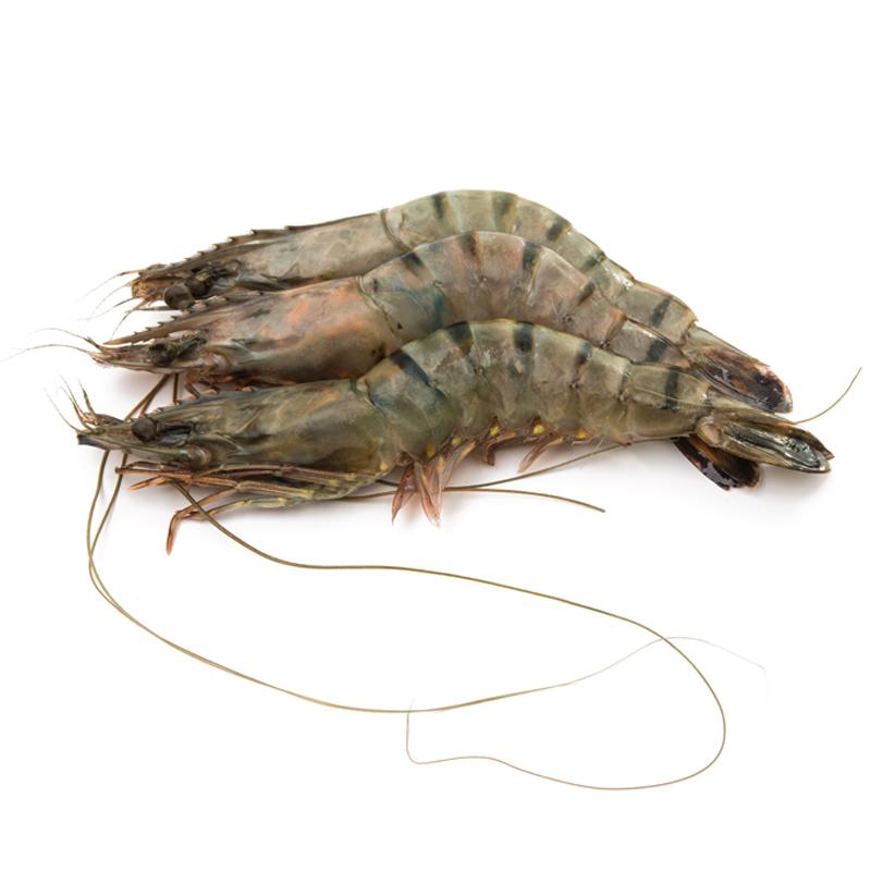 buy live tiger prawns