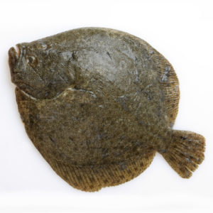 buy live turbot fish
