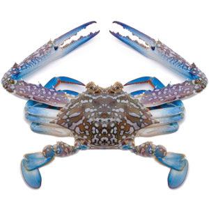 live flower crab singapore