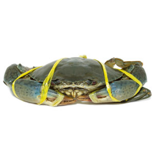 Buy Live Sri Lankan Crab